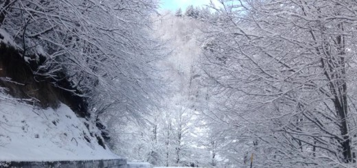 neve strade floresta