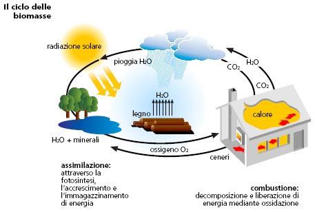 ciclo-delle-biomasse