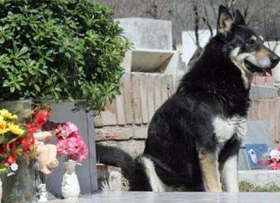 cane cerca padrone sulla tomba