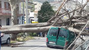 brolo macchina albero 3