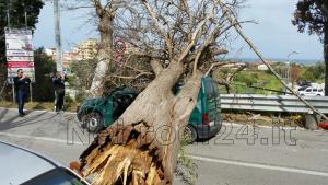 brolo macchina albero 4