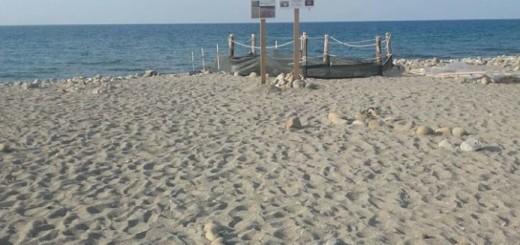 spiaggiatartarughenaso-696x928
