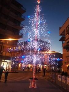 brolo-porto-franco-corso-3-albero