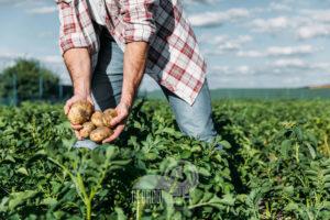 coronavirus: va a raccogliere verdure, sanzionato. dovrà pagare perché recidivo 560 euro