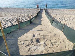 piraino –  trenta tartarughe rinvenute sulla spiaggia di gliaca